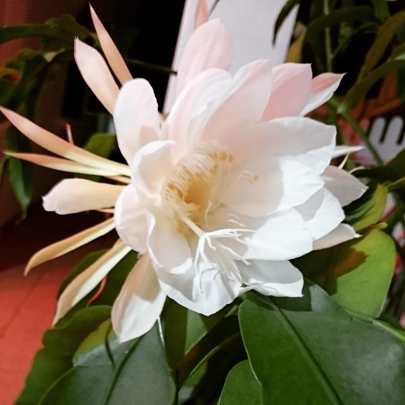 Image result for images bakawali